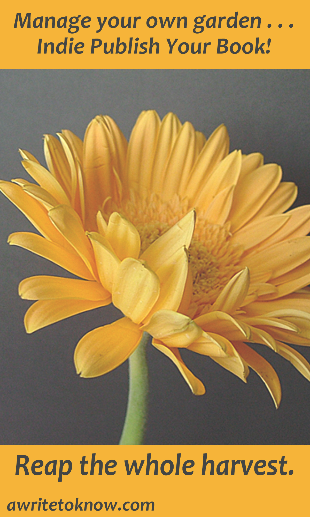 """Bright golden flower on dark brown background with words saying, """" Words that say """"How to get your book written sans struggle.""""Manage your own garden. Indie Publish Your Book. Reap the whole harvest."""""""